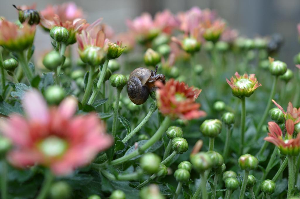 Cottage Fix blog - Snail on a flower