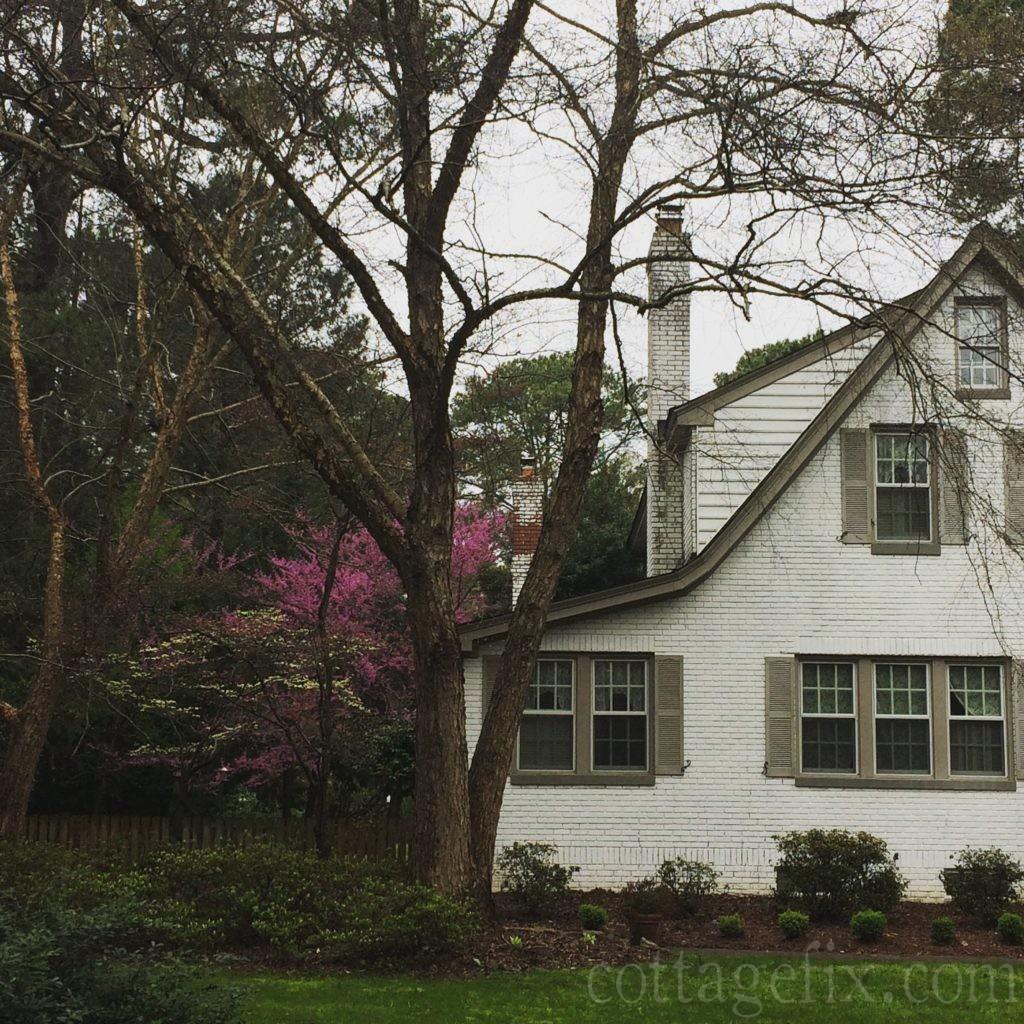 Cottage Fix blog - redbud in bloom in our side garden
