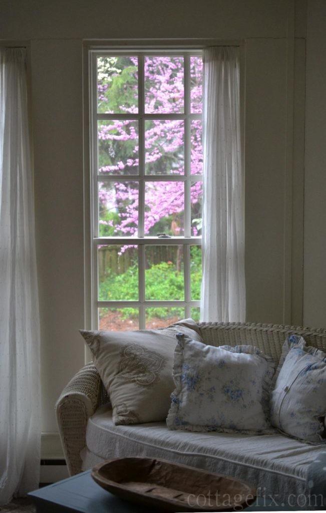 Cottage Fix blog - redbud blooming