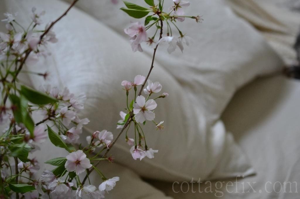 Cottage Fix blog - cherry blossom bloom