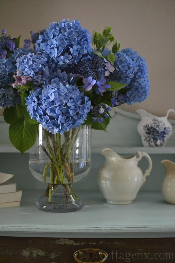 Cottage Fix blog - French blue hydrangea